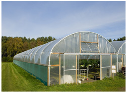 Greenhouse polytunnel with plastic film