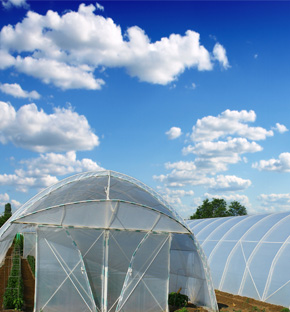 High Tunnel Plastic Greenhouse