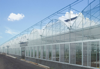 Poly Plastic Greenhouse 3