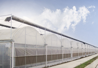 Poly Plastic Greenhouse 2