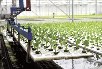 Automated DFT Floating Growing System